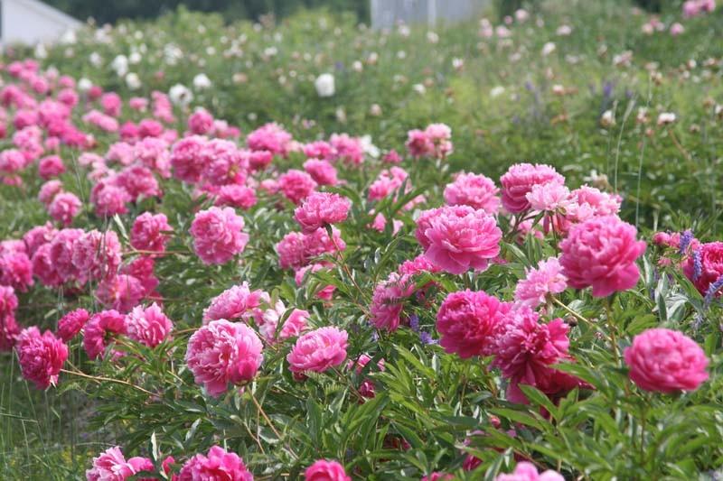 blooming002